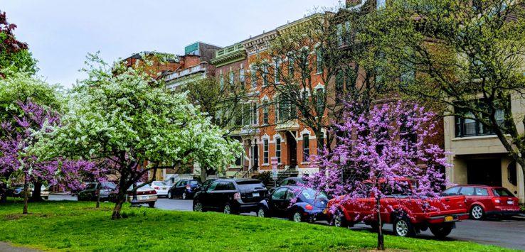 street parking Albany