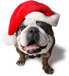 thumbnail image for christmas-bulldog-740891.jpg