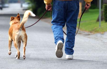 dog-walking-elk-river-mn (2).jpg