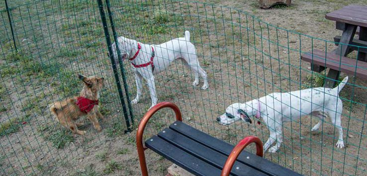 Dogs sniffing each other through a fence at the dog park
