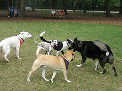 how to get your dog socialize with other dogs
