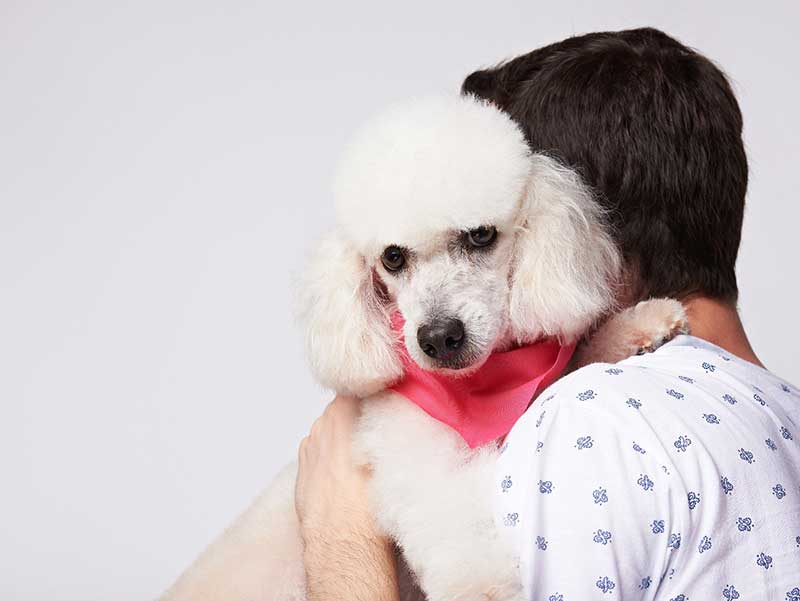 Resultado de imagen para poodle being hugged