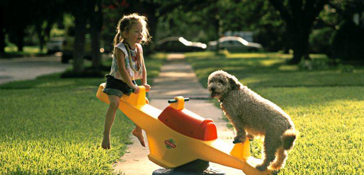 see-saw-dog1.jpg