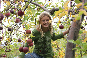Picking Apples from a Barrel