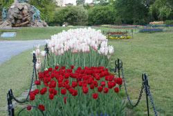 Albany Tulip Festival In Washington Park