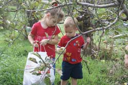 Kids Apple Picking In The Albany Area