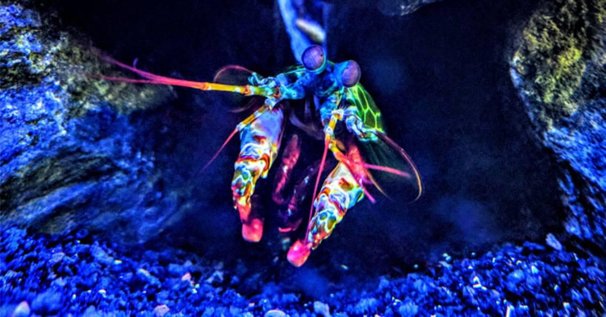 a colorful aquatic creature