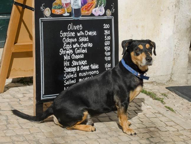 Albany, NY Dog-Friendly Restaurants You & Your Pooch Will Love