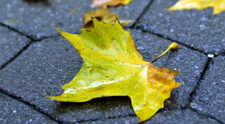 a greenish leaf lying on tiled pavement