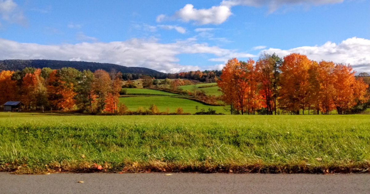 a scenic fall day with an open field and fall foliage on the trees
