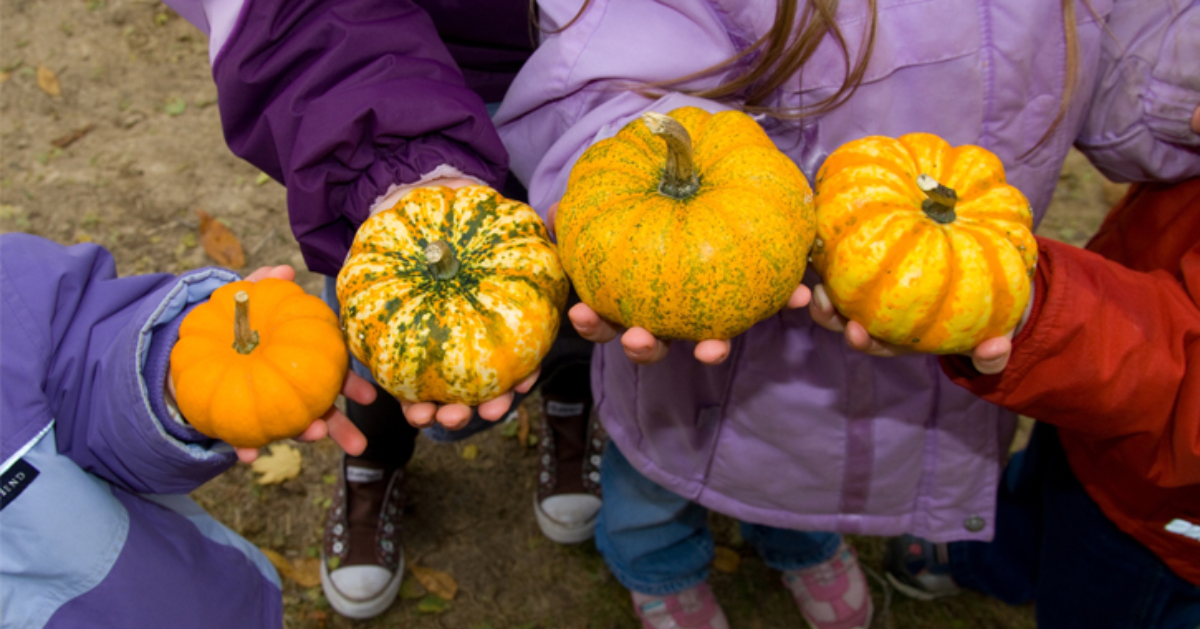the hands of four kids, each holding a gourd