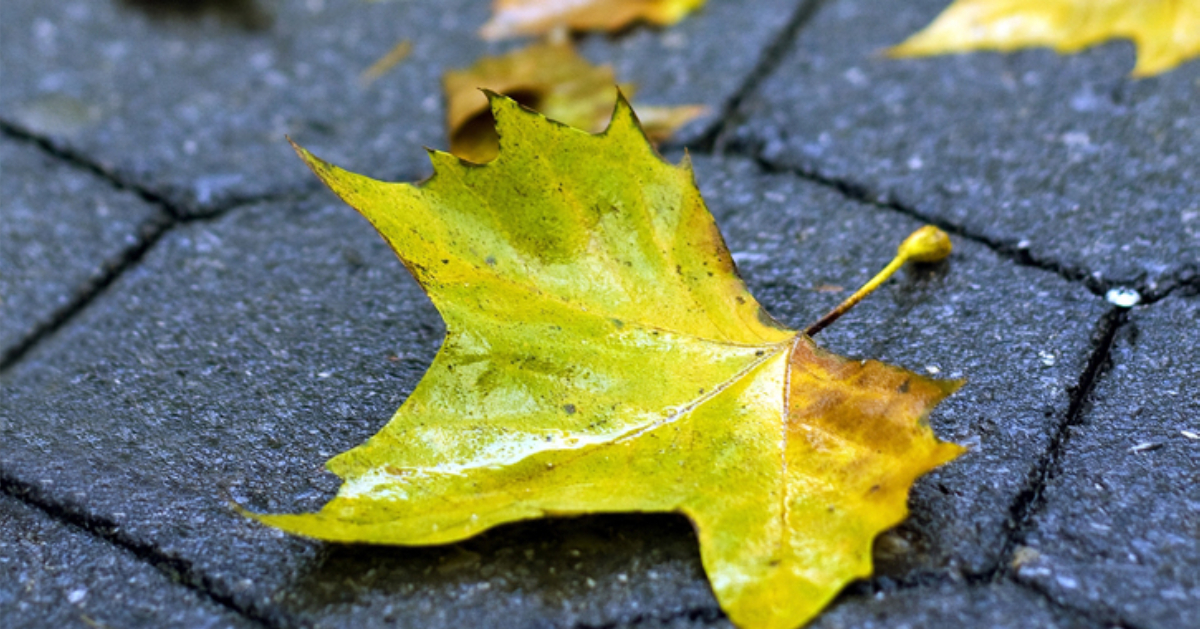 a greenish leaf lying on tiled pavement