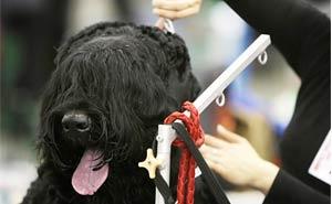 dog with brush