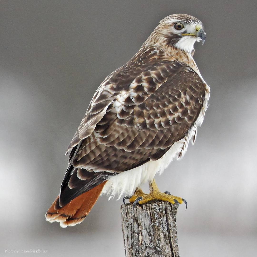 Popular Bird Species In Albany Ny Where When To Find Them