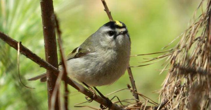 Bird at Albany Pine Bush