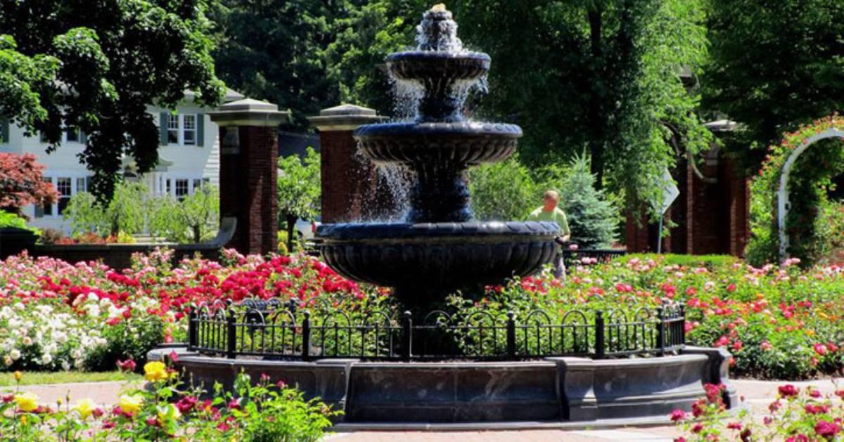 a rose garden in a park