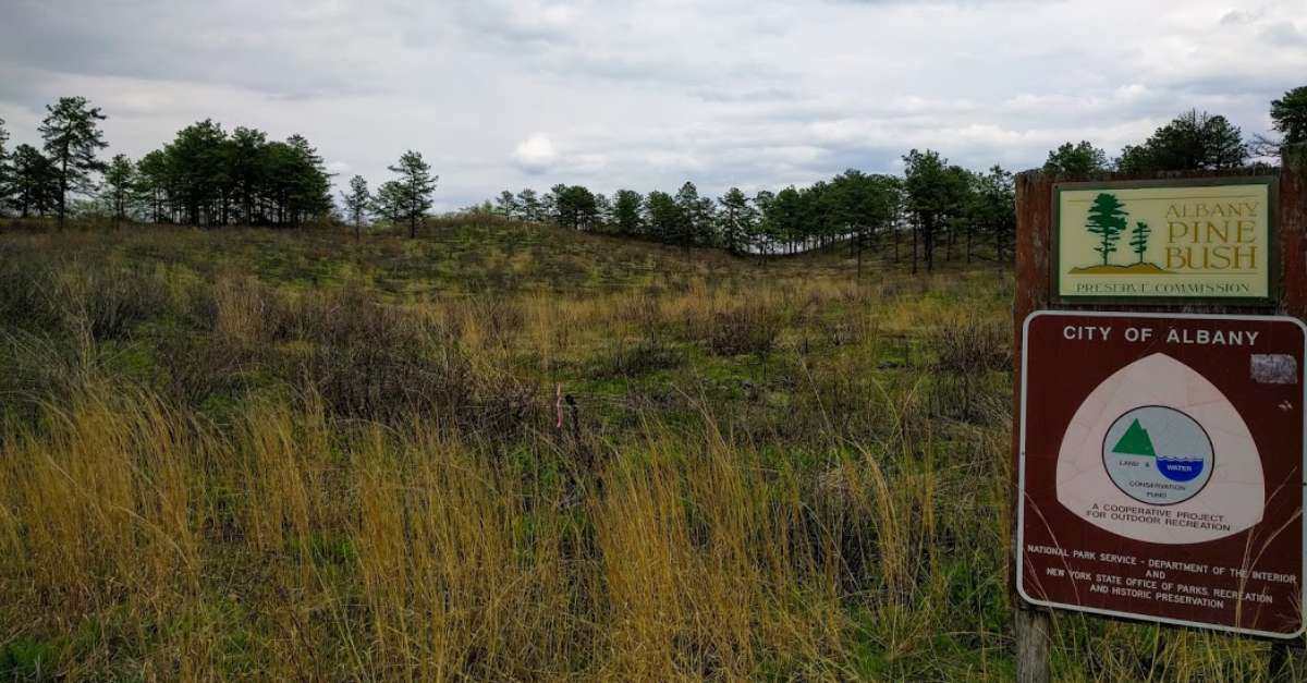 field at the albany pine bush preserve