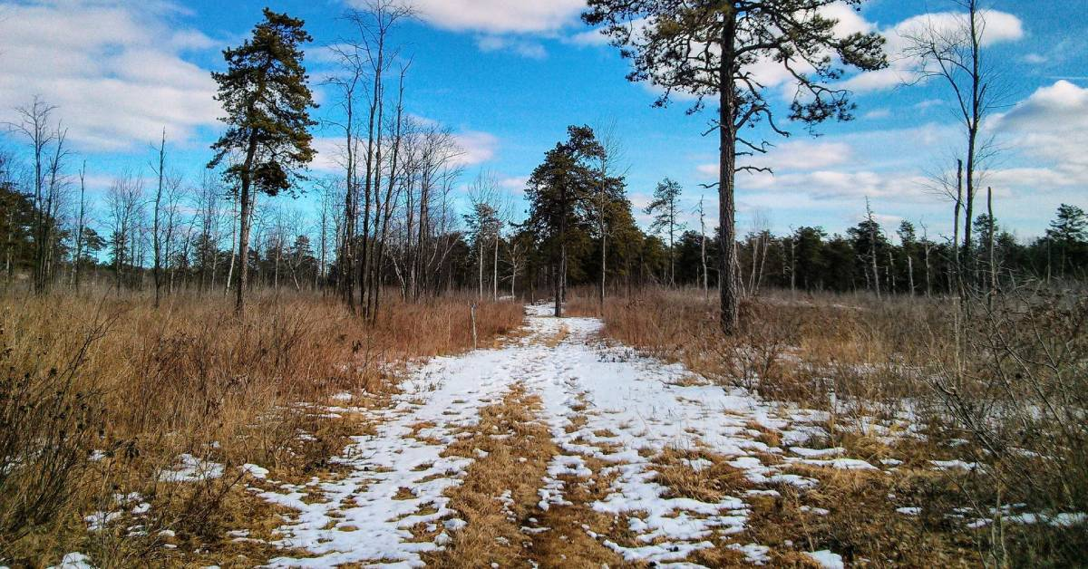 trail with light snow on the ground