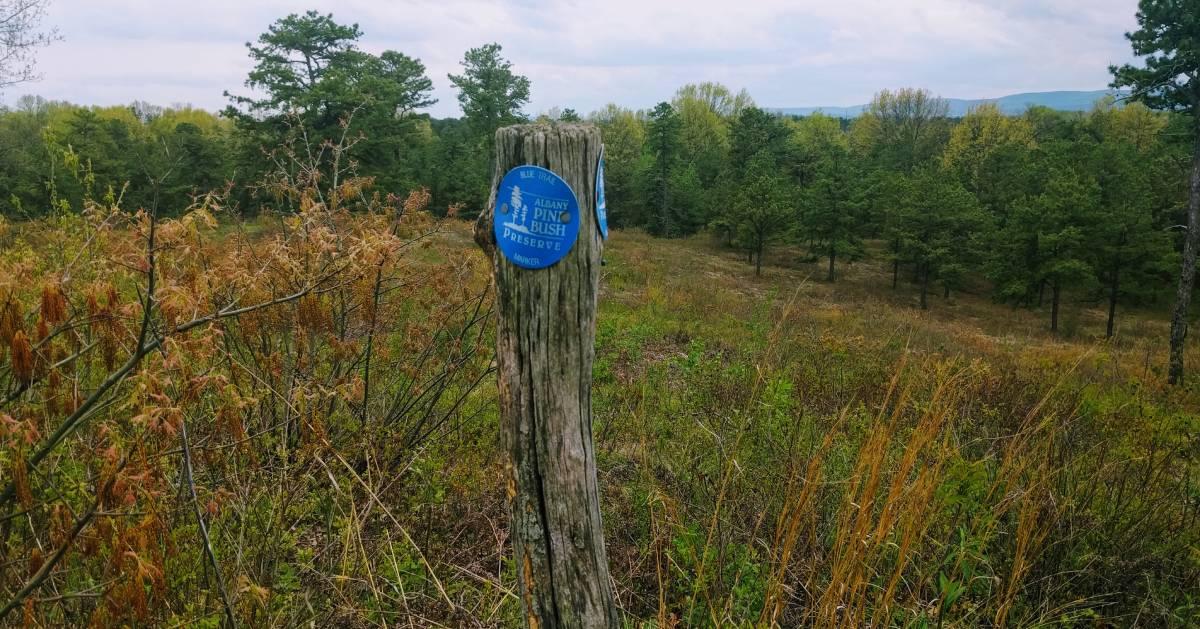 Albany Pine Bush Preserve trail marker