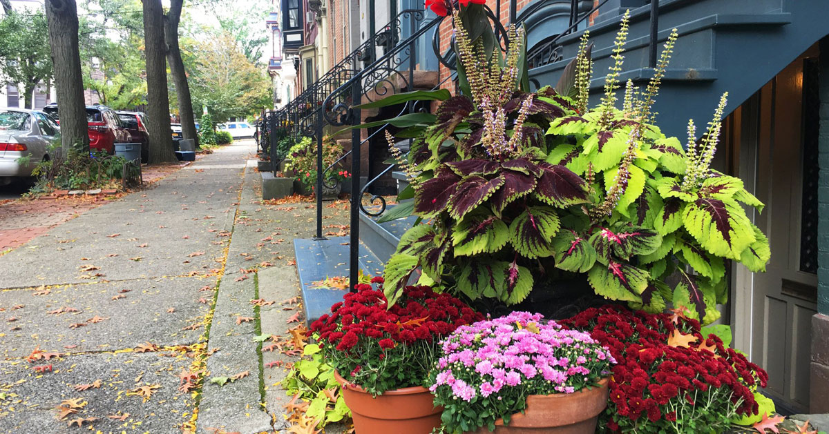 plants by a stoop on a street