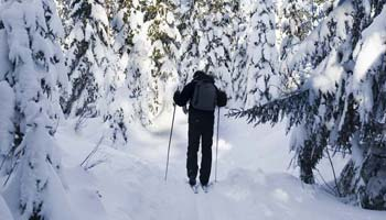 the back of a man cross country skiing, surrounded by snow covered trees