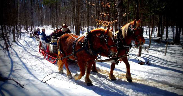 two horses pulling a sleigh of people through the woods