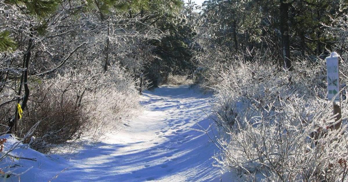a snowy trail