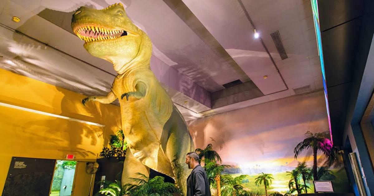 t-rex display