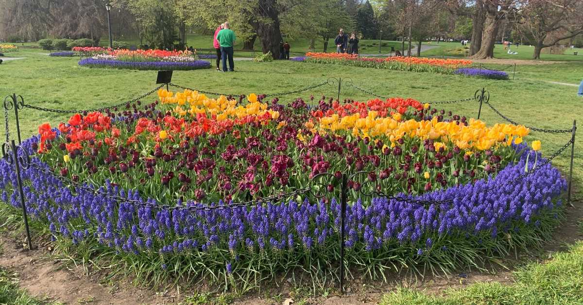 three tulip beds in a park