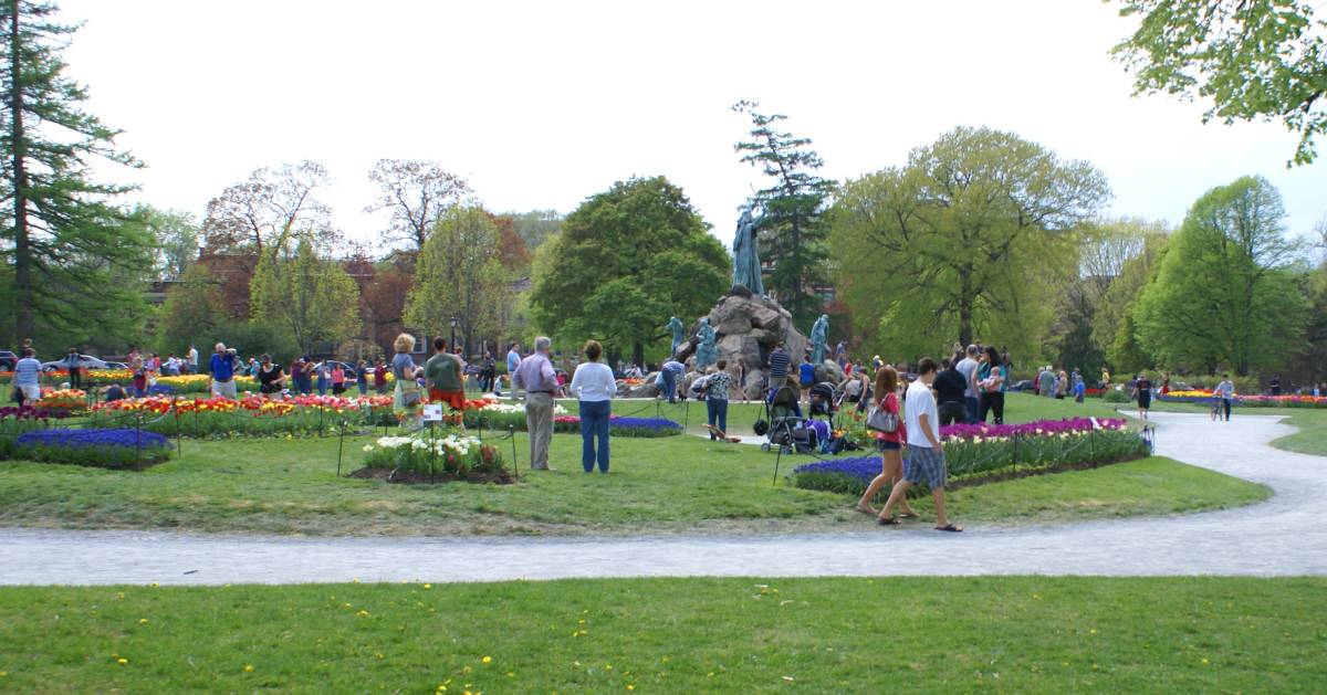 people checking out tulip beds in a park