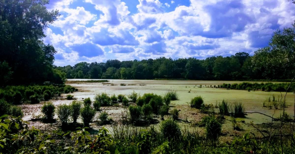 marsh area in preserve