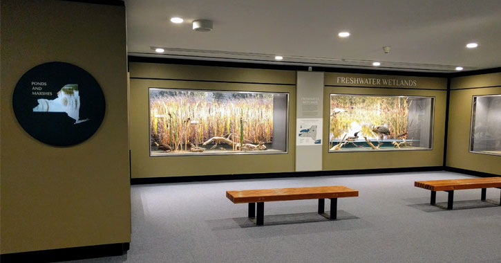 an exhibit of New York State wetlands with benches in the museum