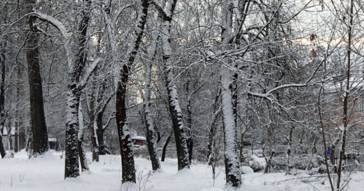 trees and a snowy area
