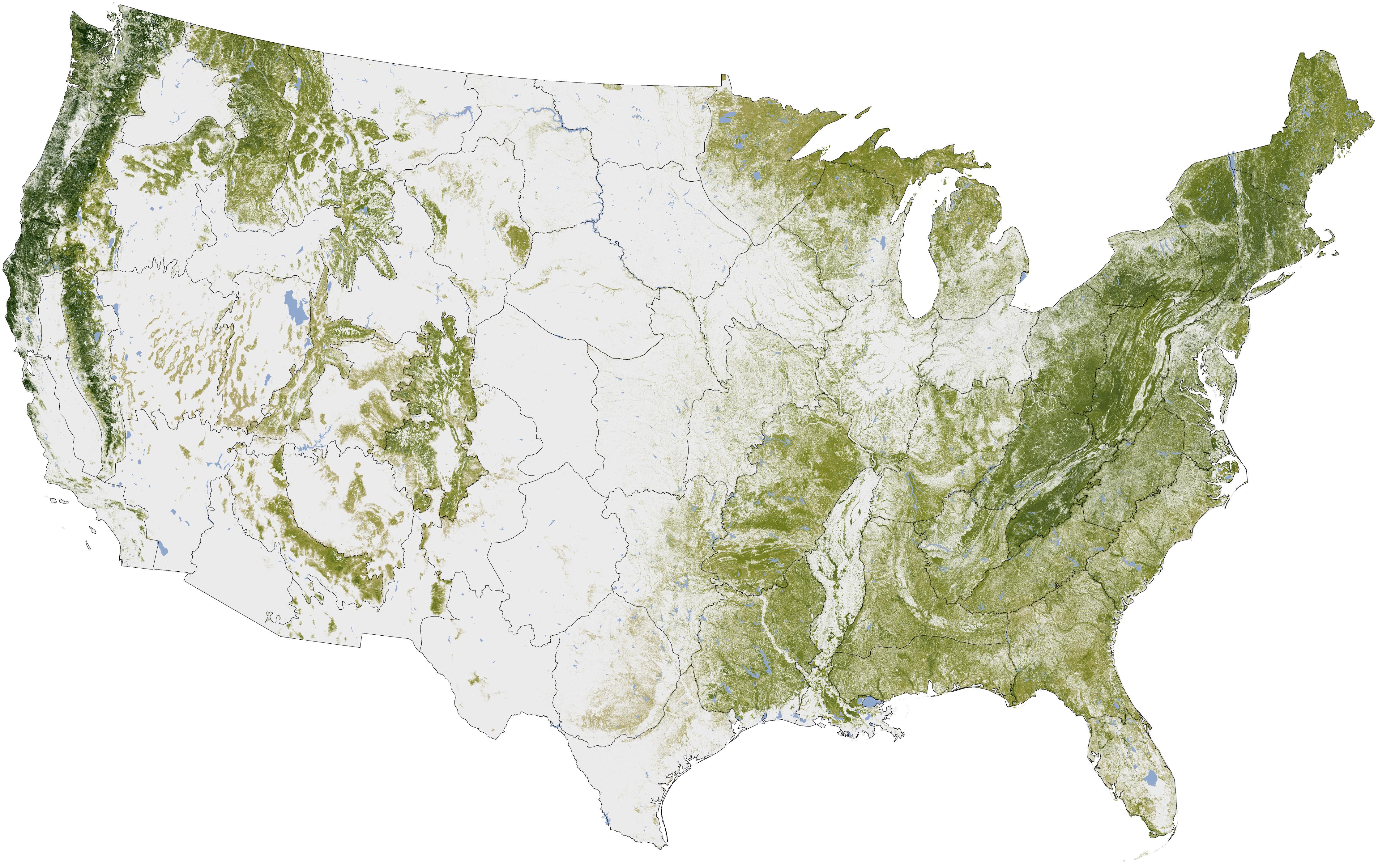 forestmap.jpg