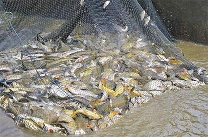 fish-count.jpg