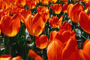 flowers4323.jpg