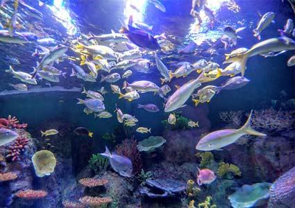swimmingfish.jpg