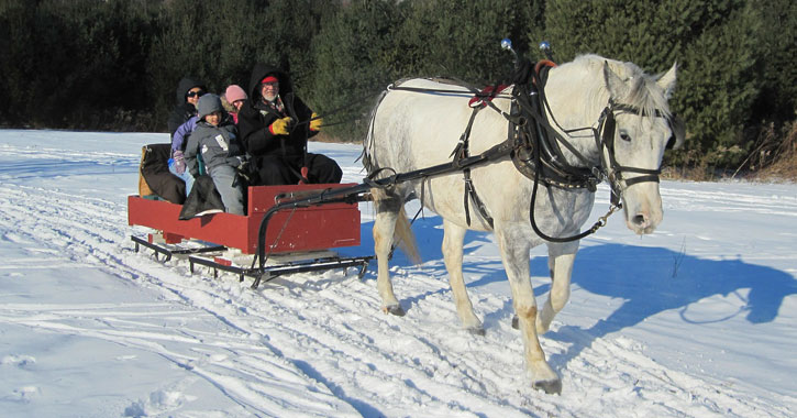 a horse and sleigh ride through the snow