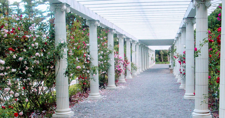 pathway with white columns and pink rose bushes