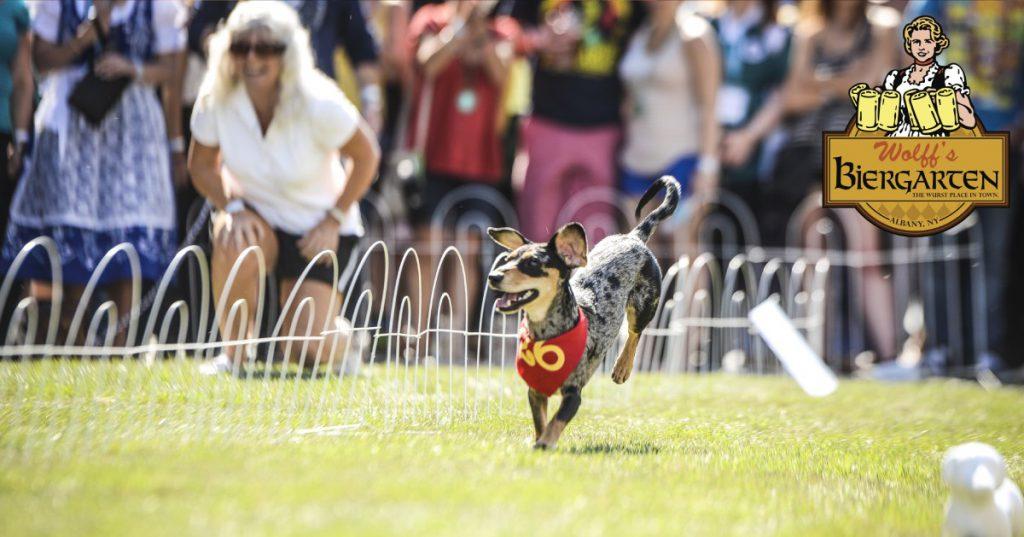 dog racing ahead