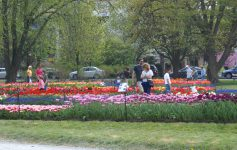 people at a tulip fest