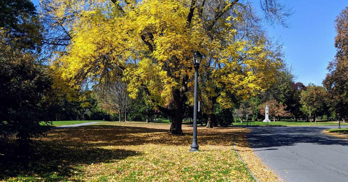 fall colors on trees in a park